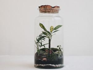 Découvrez le terrarium TONGA