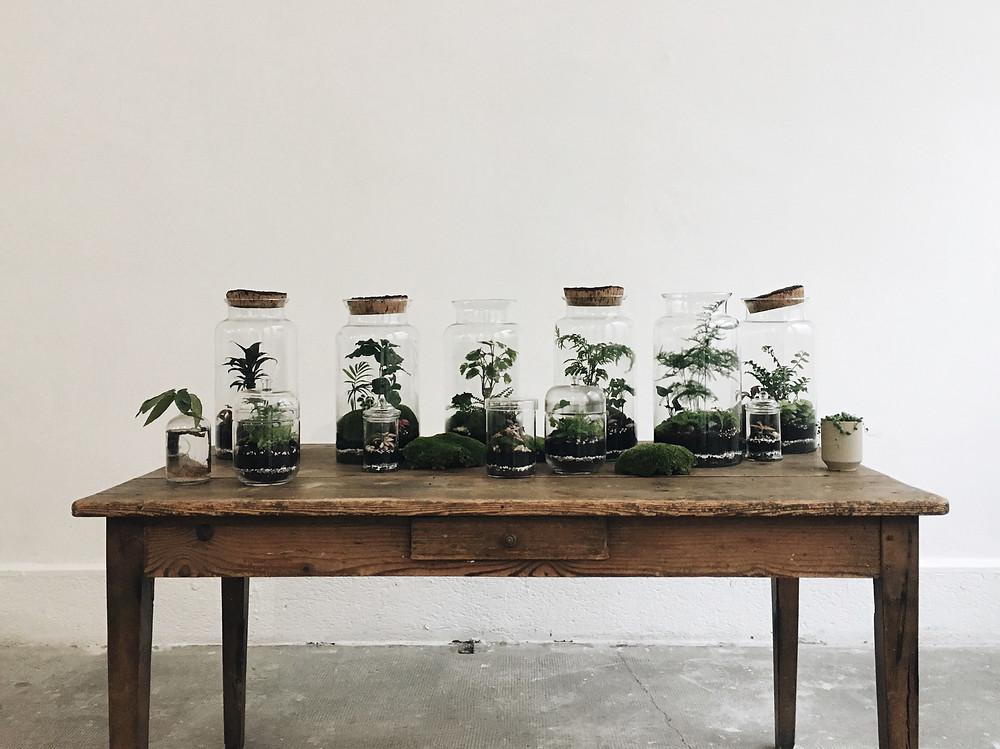 Terrariums Onno installés sur une table au Studio Quotidien à Lyon