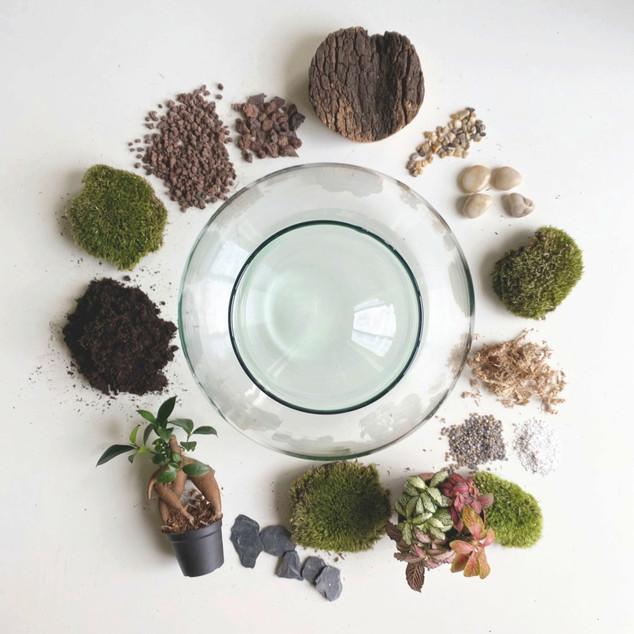 Créez votre terrarium en live de chez vous avec Onno