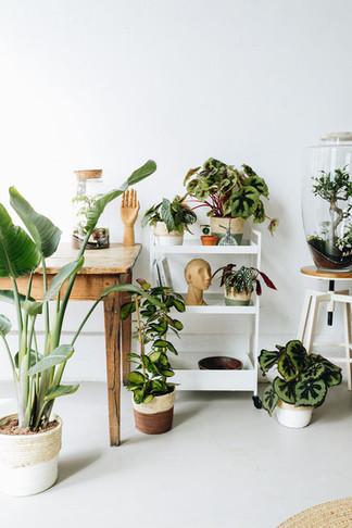 Urban jungle à Lyon : plantes et terrarium en décoration d'intérieur : oiseau de paradis, begonia, hoya
