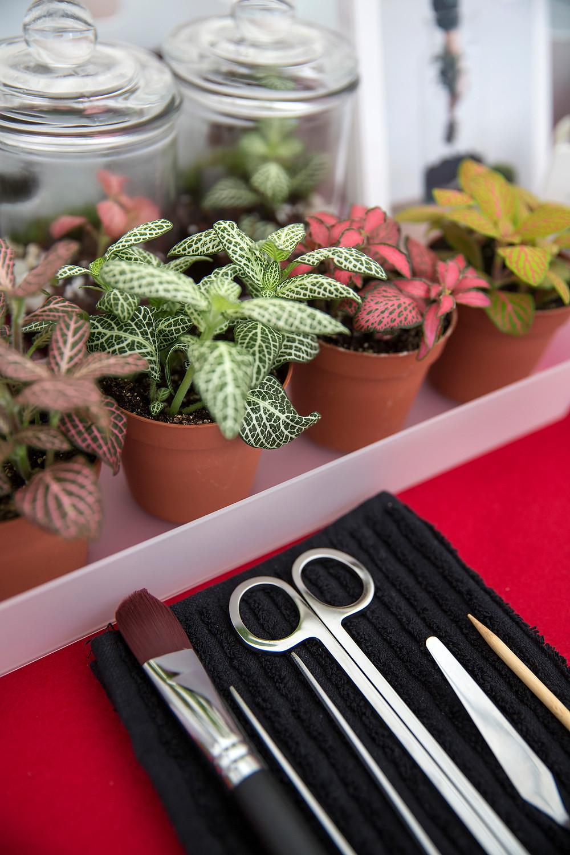 Ustensiles pour les ateliers DIY Onno avec fittonia