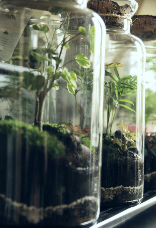 INTERVIEW : Onno, les terrariums qui vous reconnectent à la nature.