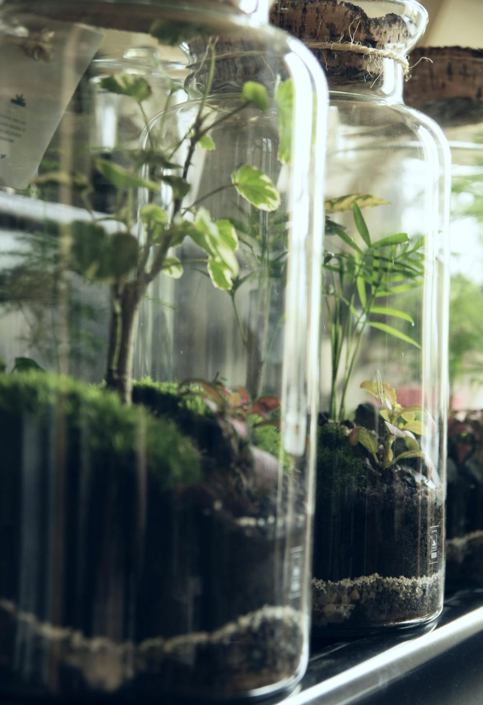 Vue de profil de terrariums Onno à Lyon