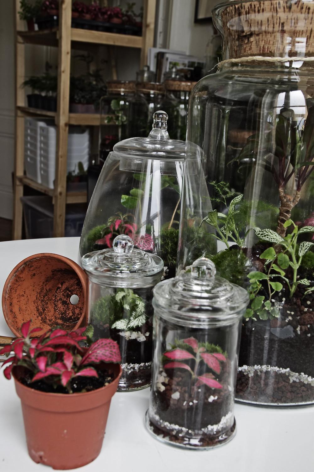Terrarium Onno sur une table à Lyon
