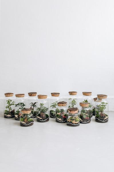 Présentation des formats de terrariums Onno