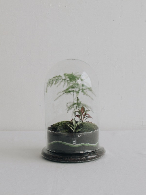 Terrarium Letaba Onno en verre recyclé à Lyon France