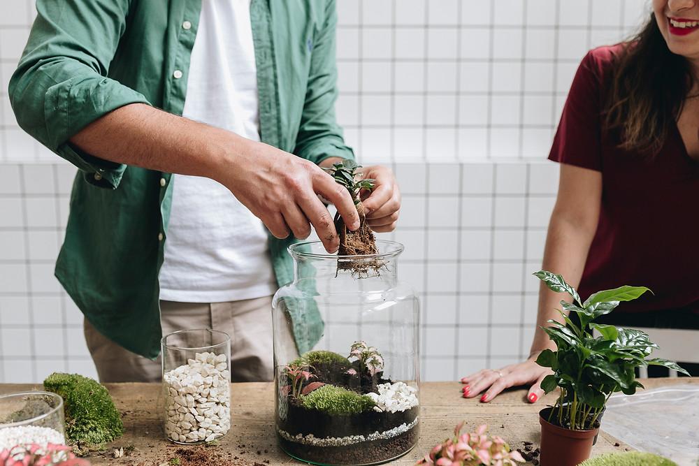 Confection d'un terrarium chez Onno, Lyon, France avec un ficus microcarpa : créativité, convivialité et bonne humeur au rendez vous !