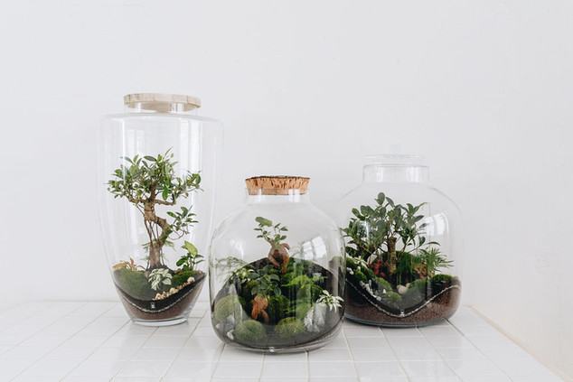 Marseille, Annecy et Chambéry : retrouvez nos terrariums dans les boutiques ROSE