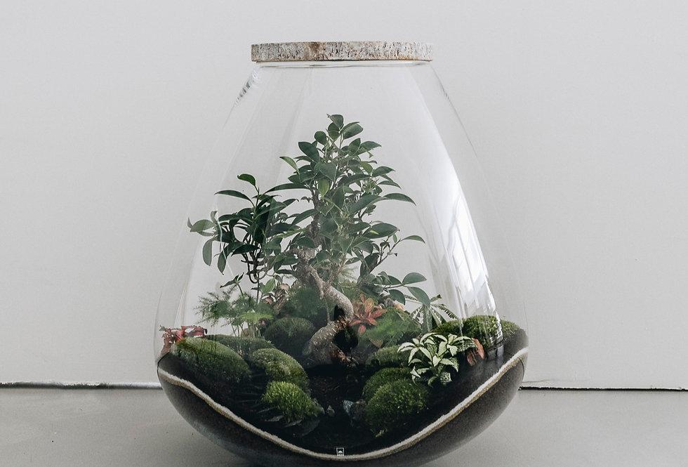Terrarium Jakarta à Lyon, Rhône Alpes, France. Contenant en verre, rondin en bois, ficus retusa, fittonia, asparagus