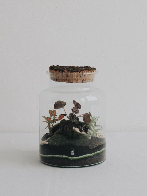 terrarium onno lyon france avec un peperomia caperata pour les ateliers diy
