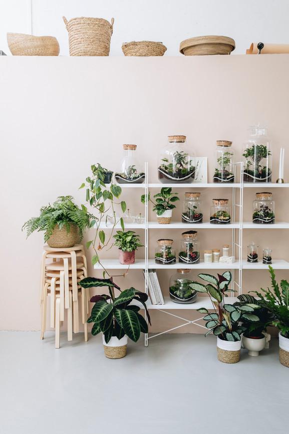 Scénographie de terrariums dans une étagère à Lyon, Rhône Alpes, France