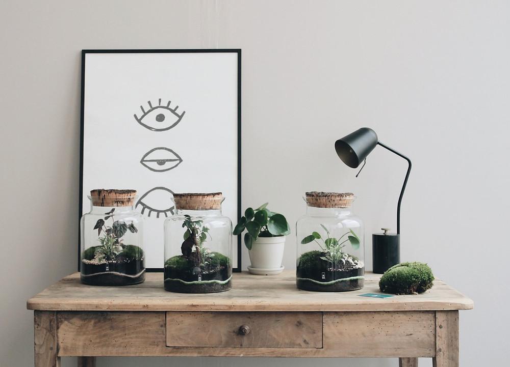 nouveau format de terrarium Onno pour les ateliers DIY à Lyon France