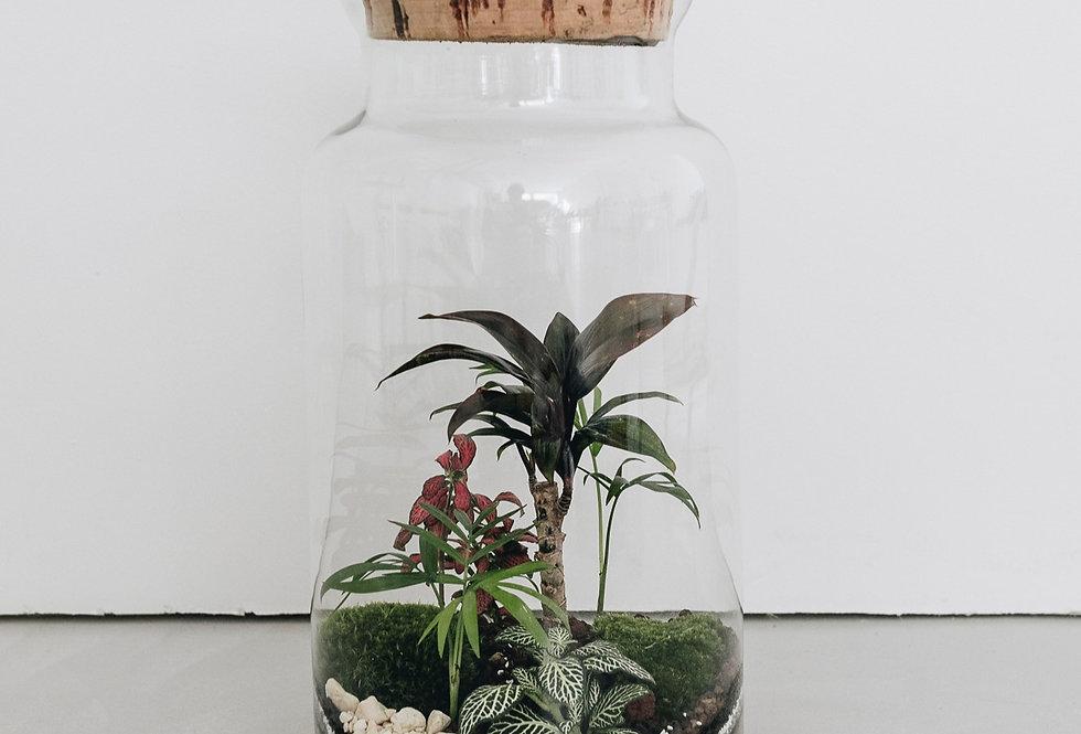 Terrarium Belém à Lyon, Rhône Alpes, France. Contenant en verre, bouchon en liège, cordyline, palmier et fittonia