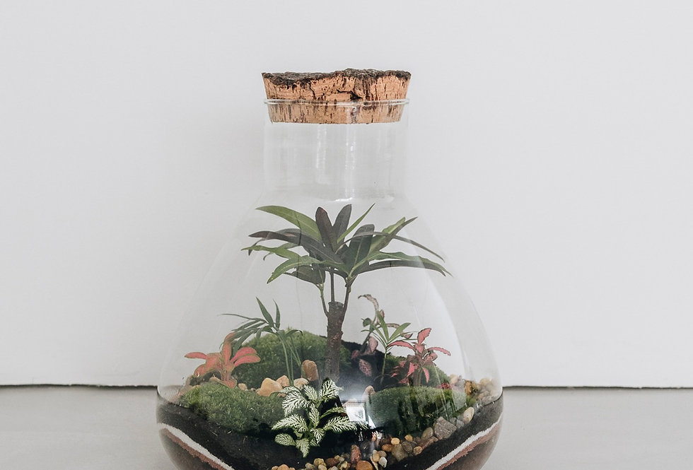 Terrarium Sumatra à Lyon, Rhône Alpes, France. Contenant en verre, bouchon en liège, cordyline, palmier et fittonia