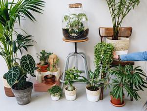 Passion plantes : découvrez notre sélection sur l'Eshop.