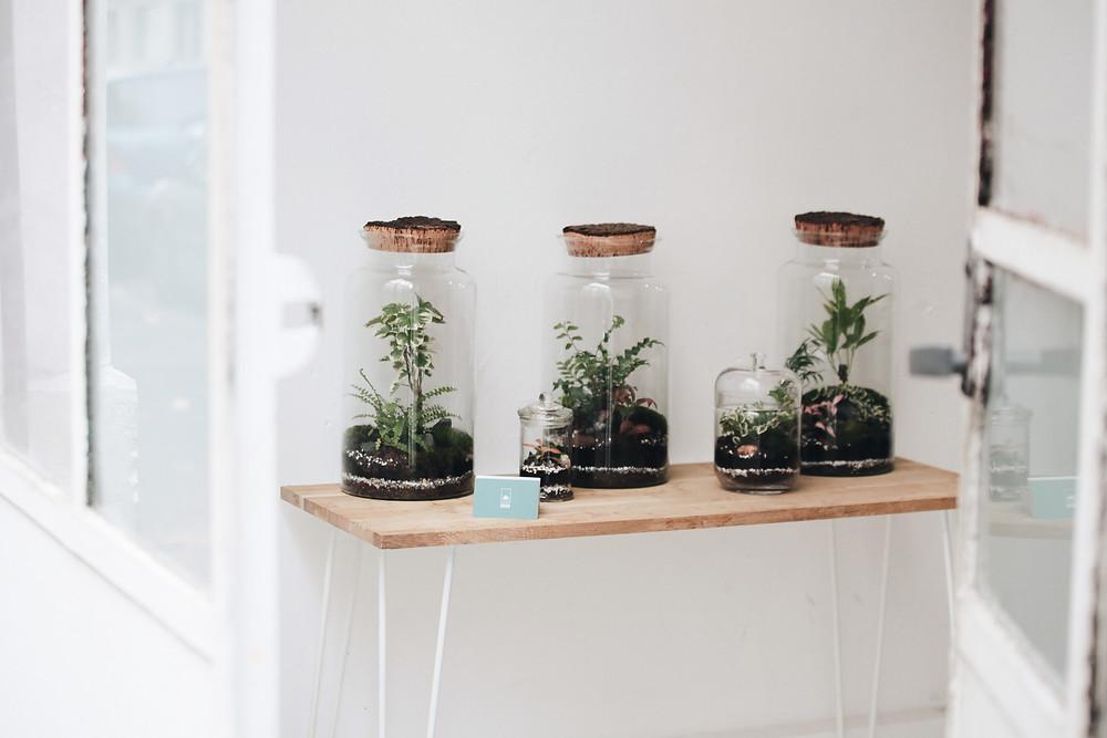 Boutiques partenaires de Lyon avec des terrariums Onno