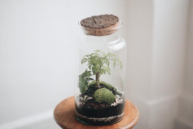 Découvrez le terrarium KIRINDY
