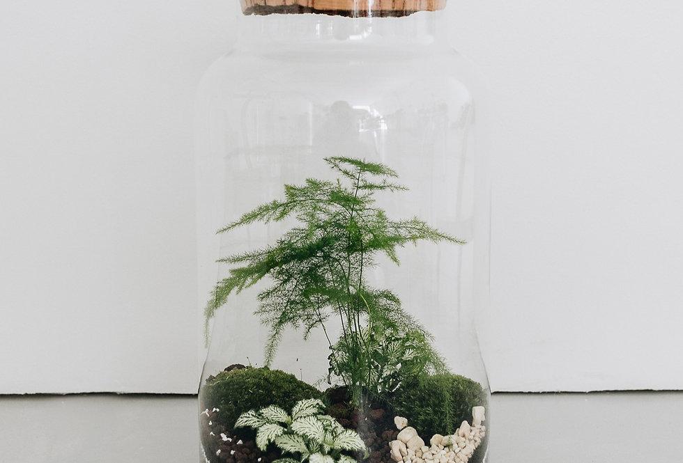 Terrarium Greenpoint à Lyon, Rhône Alpes, France. Contenant en verre, bouchon en liège, asparagus plumosus, lierre, fittonia