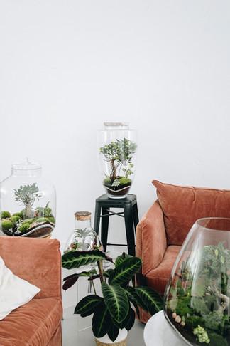 Plantes et terrariums à Lyon, Rhône Alpes, France