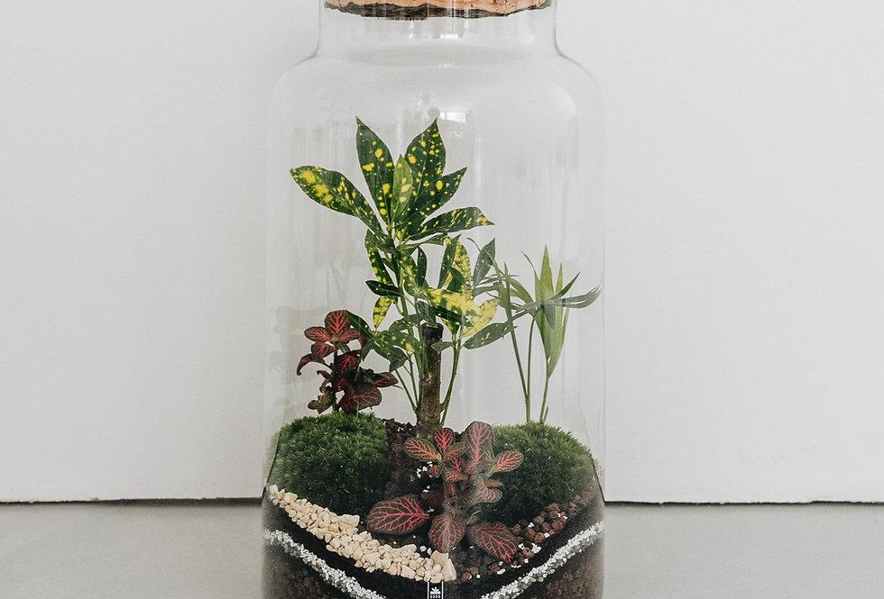 Terrarium Tonga à Lyon, Rhône Alpes, France. Contenant en verre, bouchon en liège, croton, palmier et fittonia