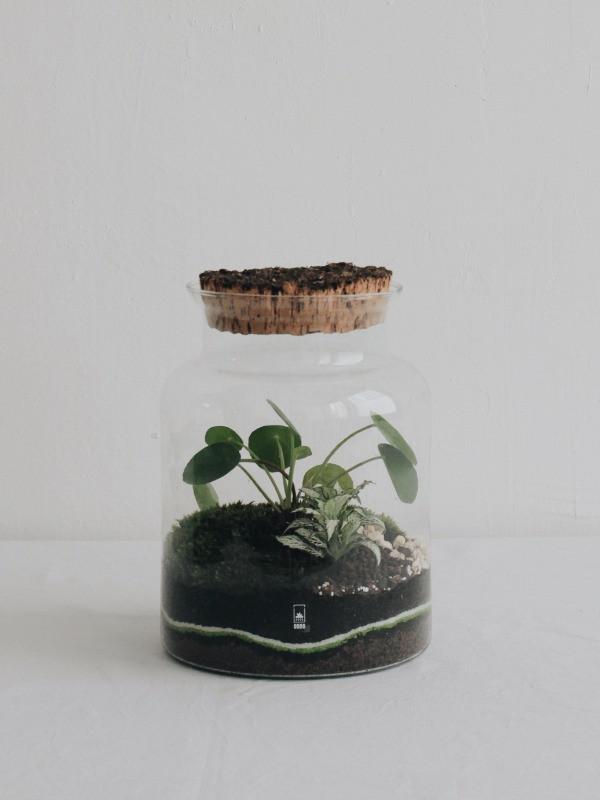 terrarium onno lyon france avec un pilea peperomioides pour les ateliers diy