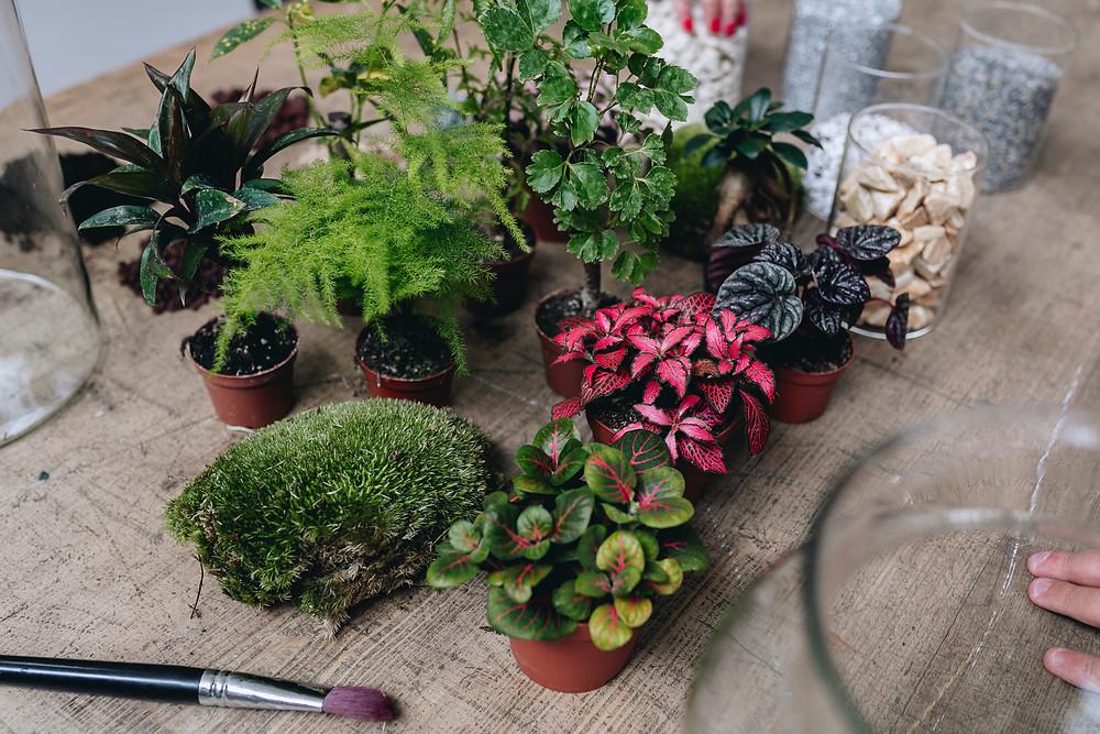 Atelier terrariums avec plantes, contenants et éléments de décoration à Lyon, Rhône Alpes, France
