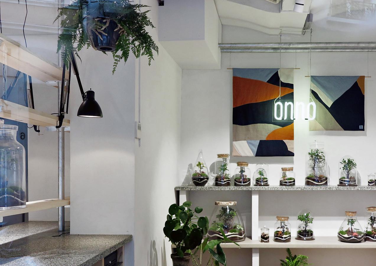Onno, boutique de terrarium à Lyon. Boutique design, de terrarium et et de plantes rares tropicale d'exception
