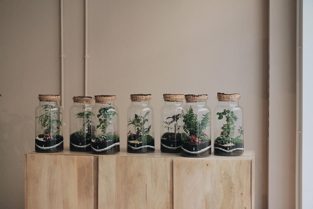Terrarium Onno dans un showroom chez Made à Lyon, Rhône Alpes, France