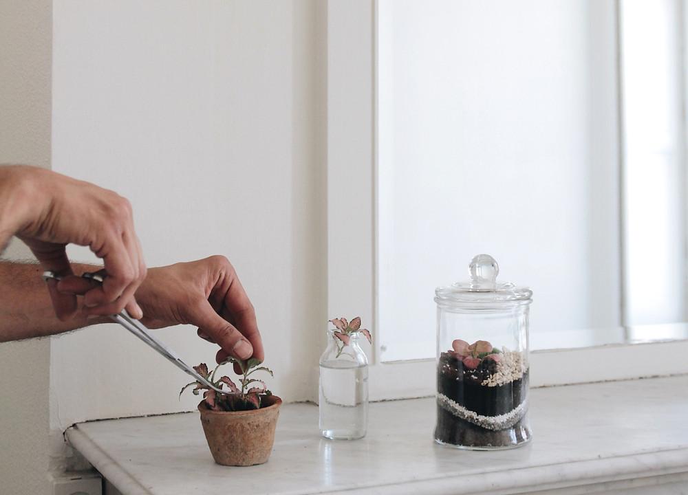 Taille et bouturage de fittonia d'un terrarium Onno à Lyon France