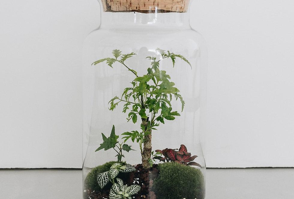 Terrarium Kirindy à Lyon, Rhône Alpes, France. Contenant en verre, bouchon en liège, polyscias filicifolia, fittonia, lierre