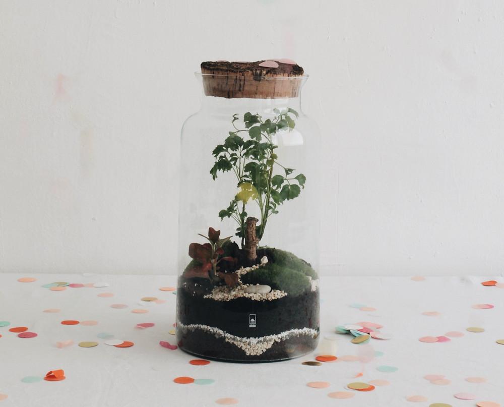 Bon cadeau atelier terrarium DIY à Lyon, France, Rhône Alpes