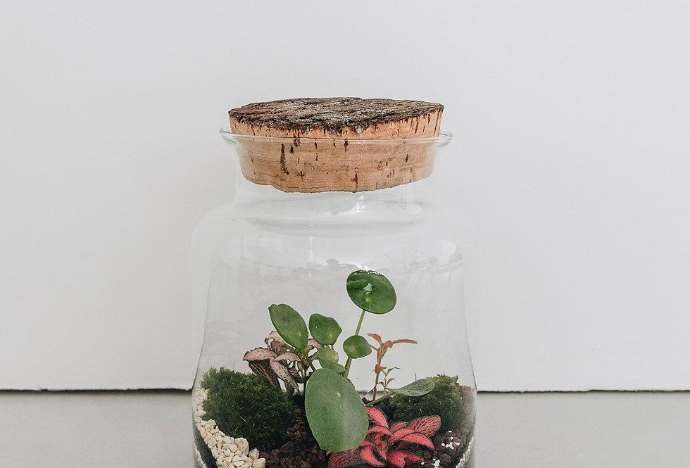Terrarium Dali à Lyon, Rhône Alpes, France. Contenant en verre, bouchon en liège naturel avec pilea et fittonia