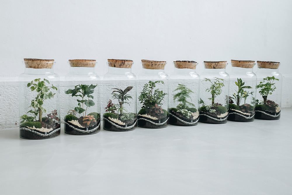 Terrariums à Lausanne dans le concept store suisse Particules en Suspension, une idée cadeau originale