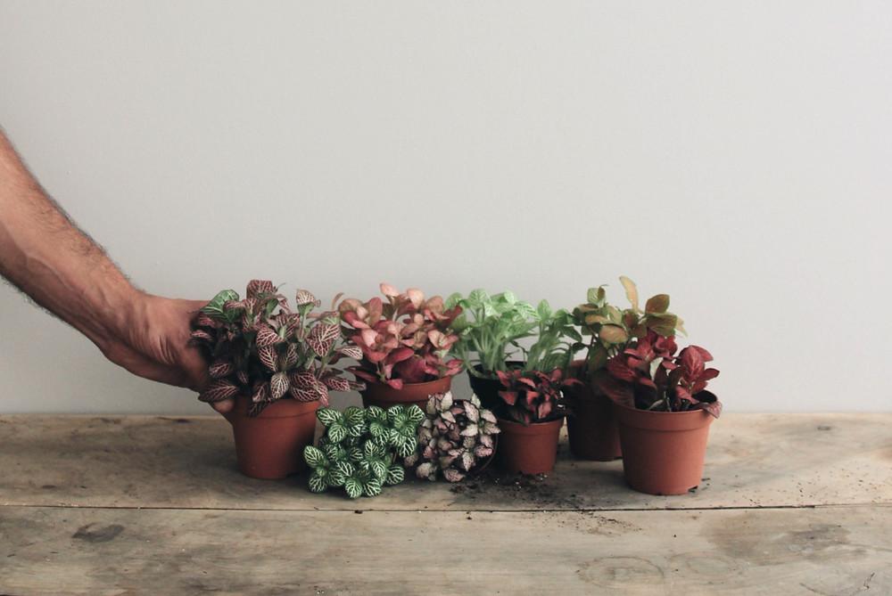 bouquet de fittonia de couleur de terrarium Onno à Lyon France