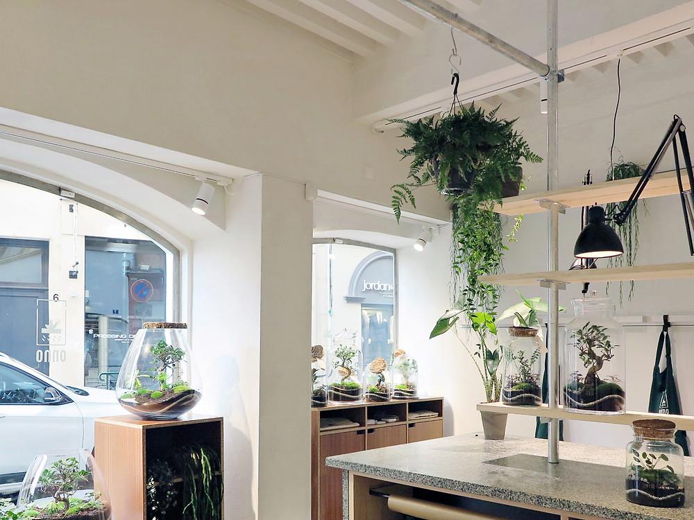 Boutique Onno - Terrariums et plantes -  7 rue du plâtre, Lyon 1er, Rhône Alpes, France