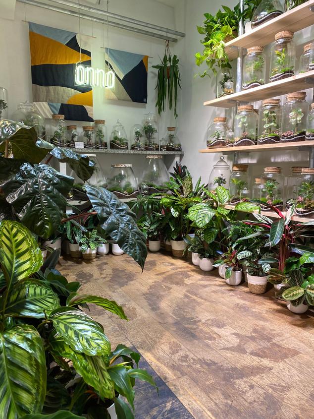 Découvrez notre sélection de plantes graphiques sur l'Eshop