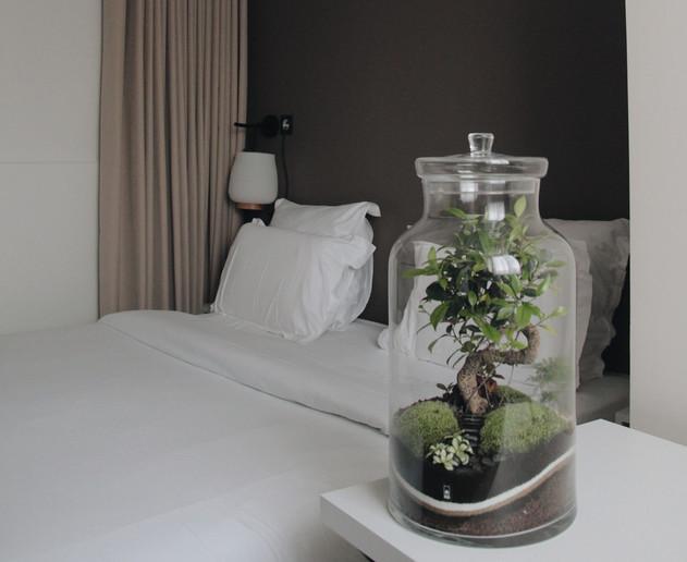 Terrarium Bali dans une chambre d'hôtel à Lyon, France