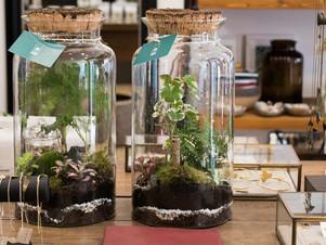 Les terrariums Onno s'installent au concept store MAISON MATHÛVÛ
