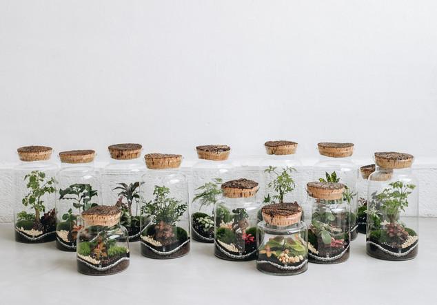 Découvrez nos terrariums à Lausanne