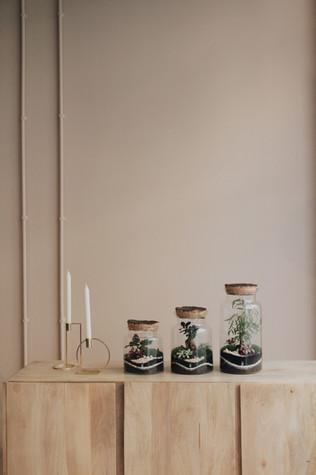 Terrariums en décoration d'un showroom