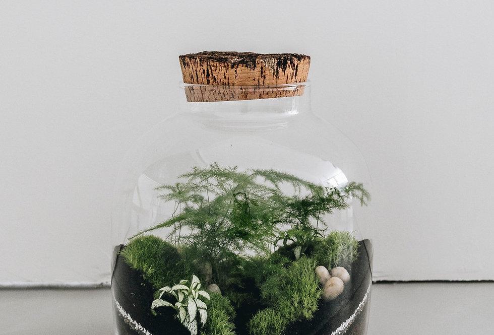 Terrarium Sabie à Lyon, Rhône-Alpes, France. Contenant en verre, bouchon en liège, asparagus, fittonia, mousse
