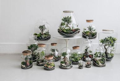 Présentation de la collection 2020 des terrariums Onno à Lyon, Rhône Alpes, France