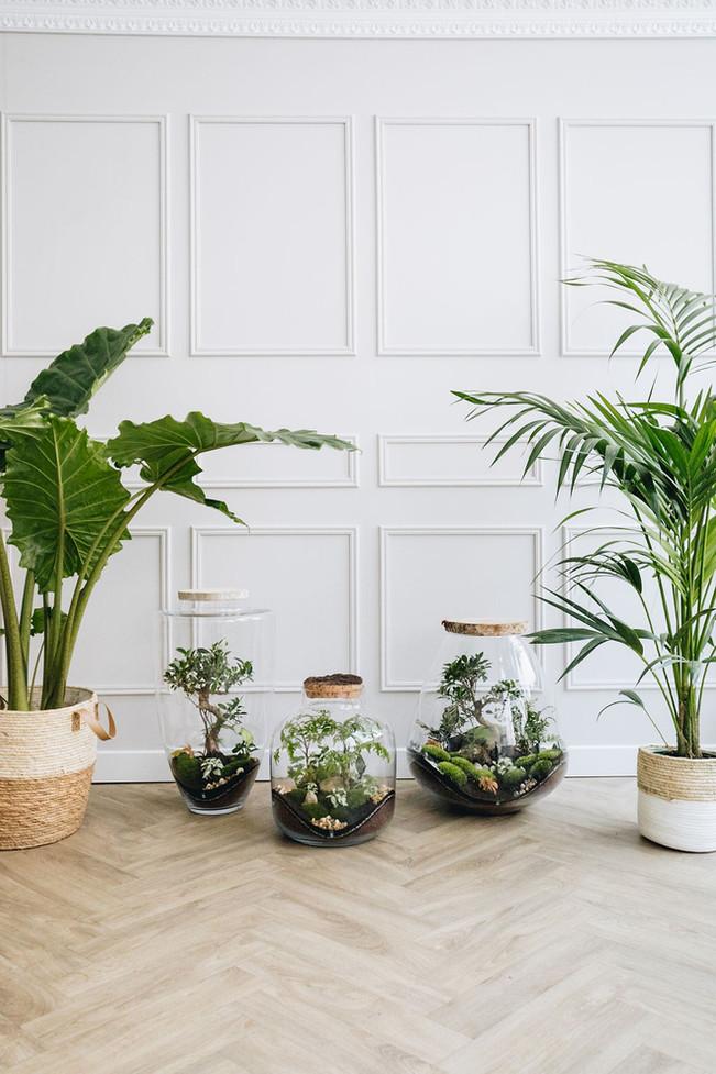 Terrarium et plantes : alocasia portodora et Palmier kentia à Lyon, France