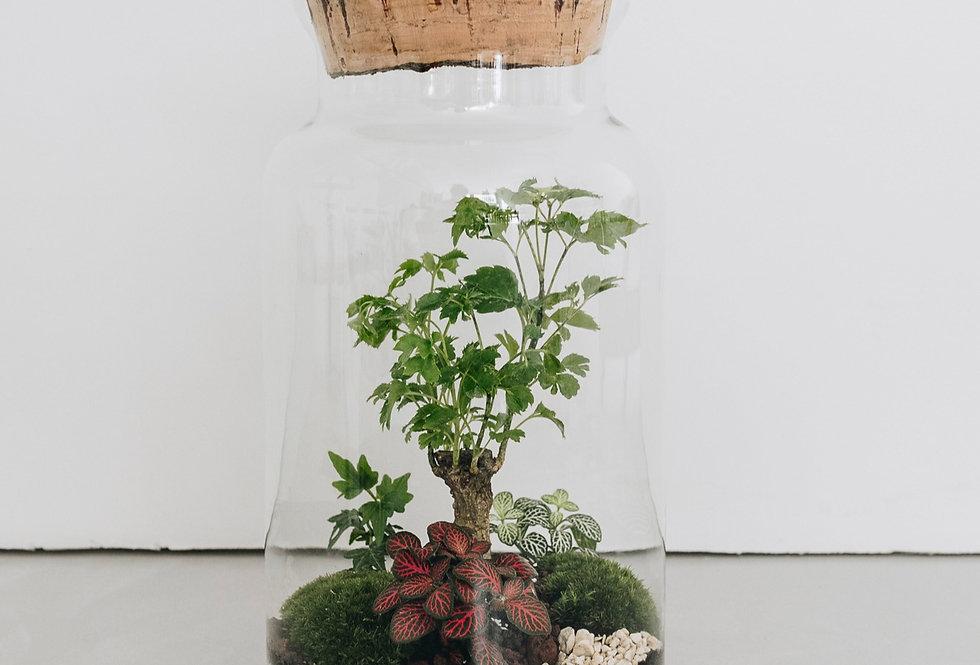 Terrarium Bangalore à Lyon, Rhône Alpes, France. Contenant en verre, bouchon en liège, polyscias aralia, lierre, fittonia