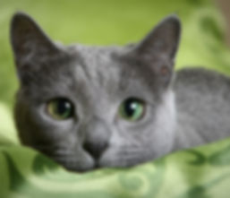 cat green eyes.jpg