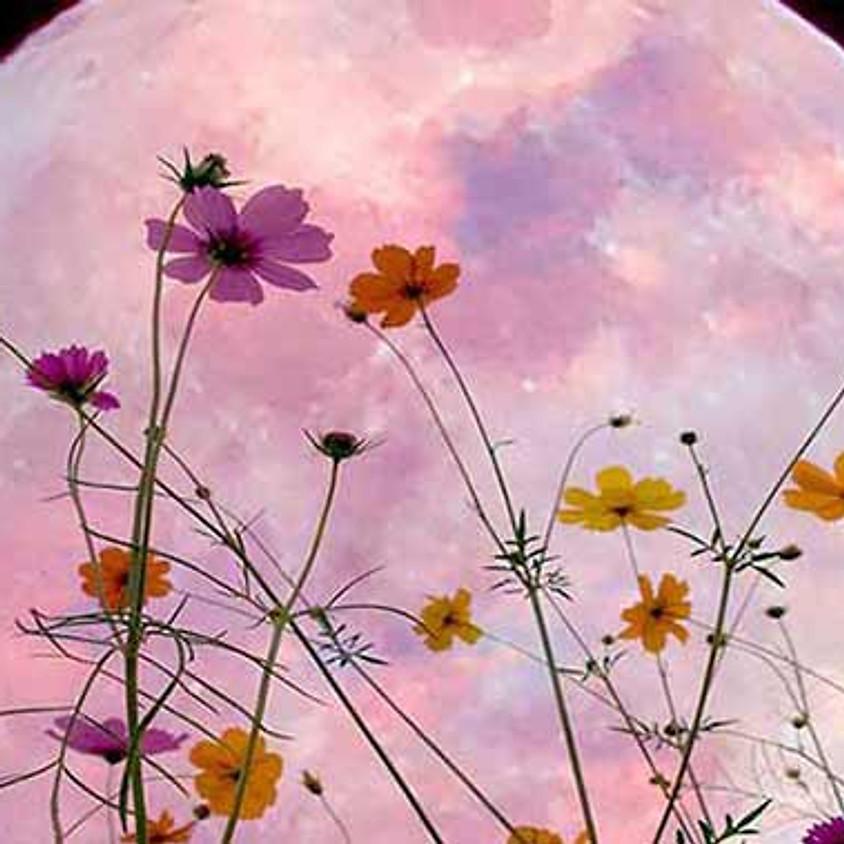 Full Super Flower moon meditation