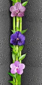 """Орхидея """"Классика"""""""
