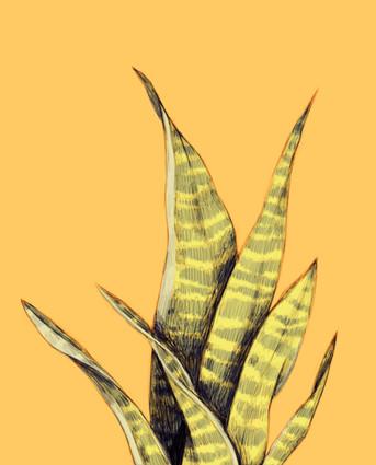 Stachelbaum2.jpg