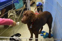Guide  Dog fund raiser 130
