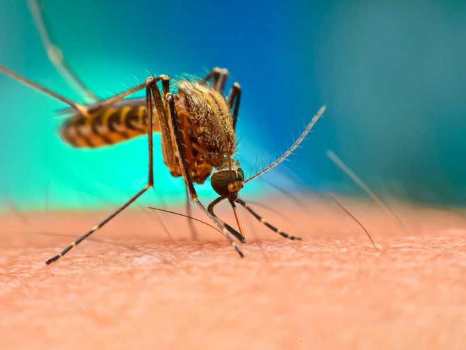 La dengue: C'est quoi et comment la soigne-t-on?
